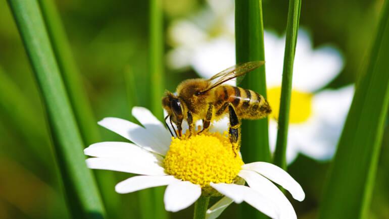 Family Fun Creating a Bee-autiful Garden