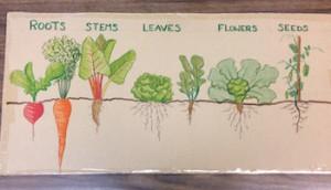 plantparts1