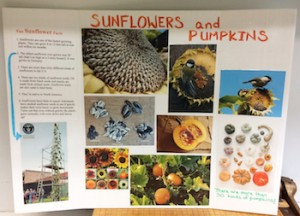 sunflower-and-pumpkins-board-3