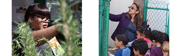 GrowingGreat to honor Para Los Niños Preschool Teachers at Farm to Table