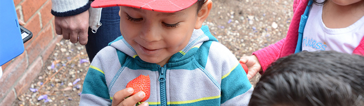 Child Enjoys Strawberry